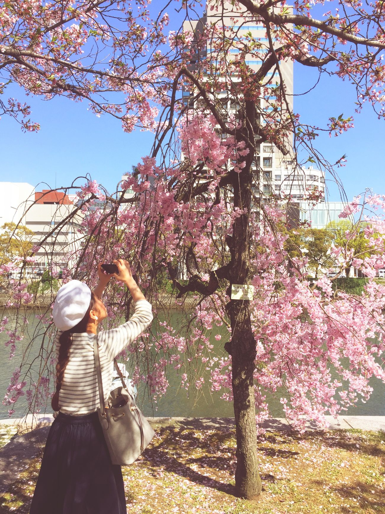 Cherry Blossoms Springtime Happy Time Withbestfriend Take Photos Smile Peacepark Hiroshima Japan