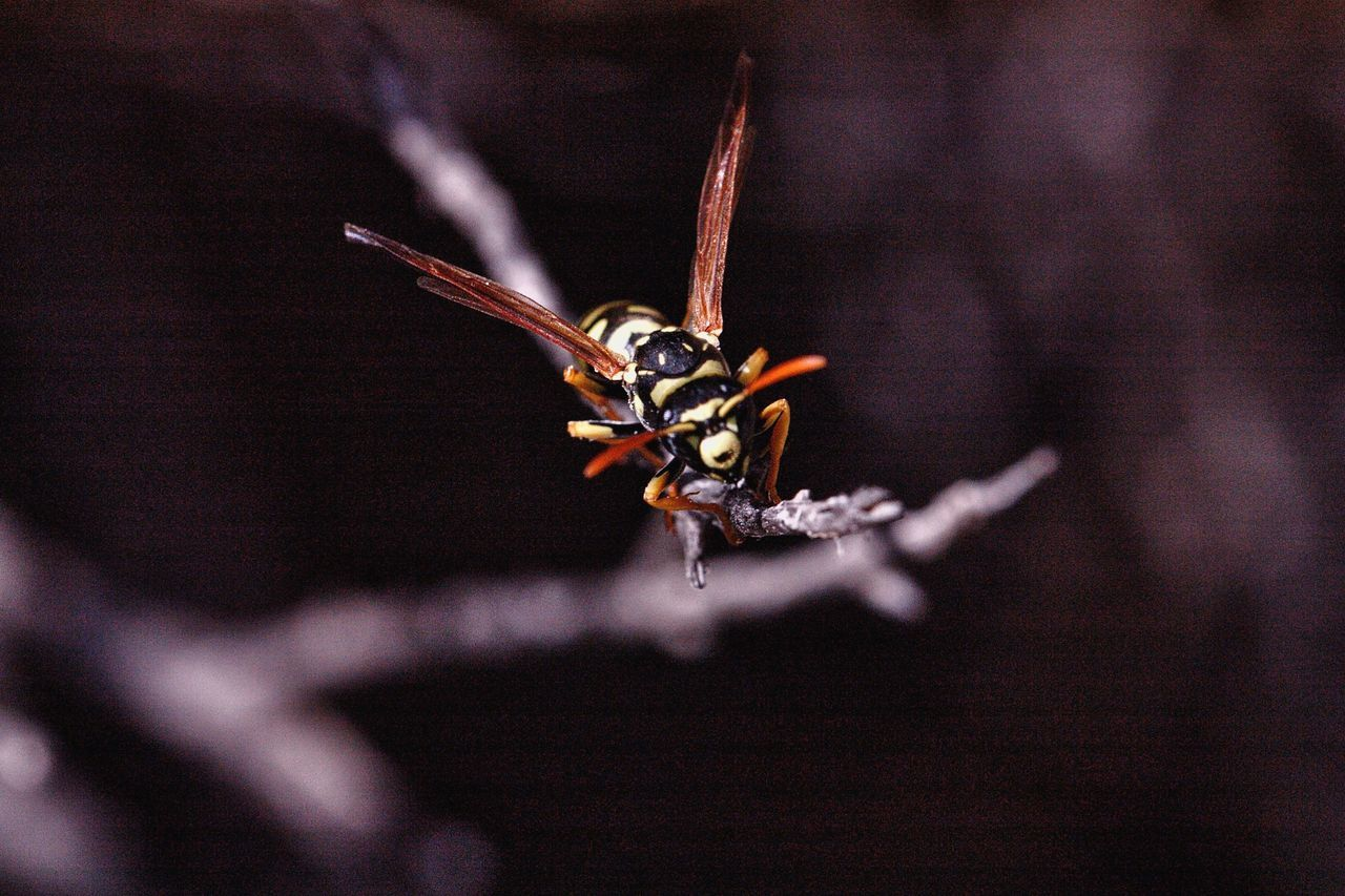 one animal, animal themes, animals in the wild, insect, animal wildlife, no people, close-up, nature, outdoors, day, full length
