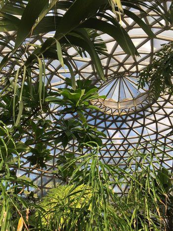 Brisbane Mt Coot-tha Botanical Gardens Dome Greenhouse Plant Growth