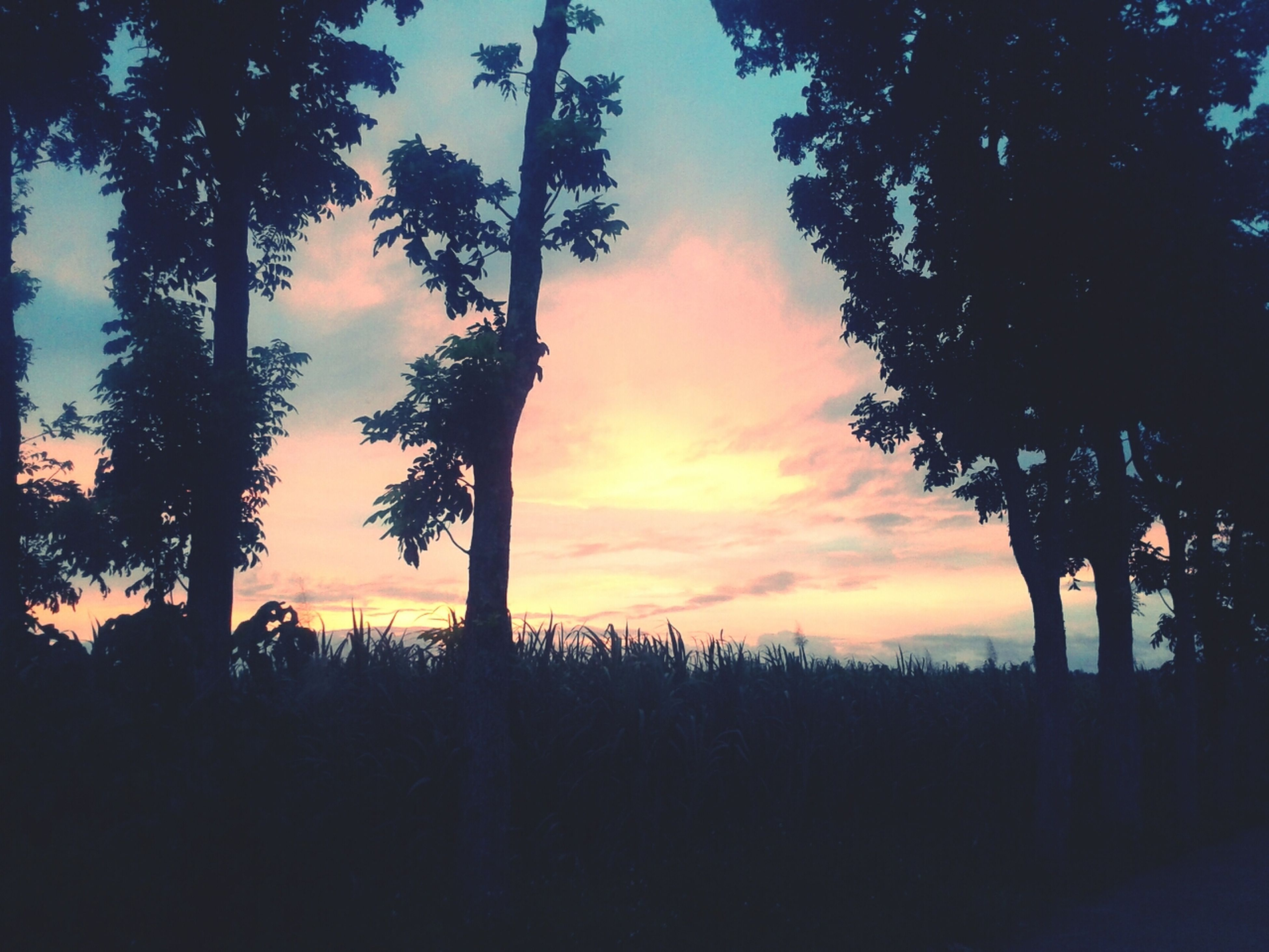 sunset, silhouette, tree, tranquility, tranquil scene, scenics, beauty in nature, sky, orange color, nature, idyllic, cloud - sky, tree trunk, palm tree, landscape, growth, non-urban scene, dramatic sky, outdoors, dusk