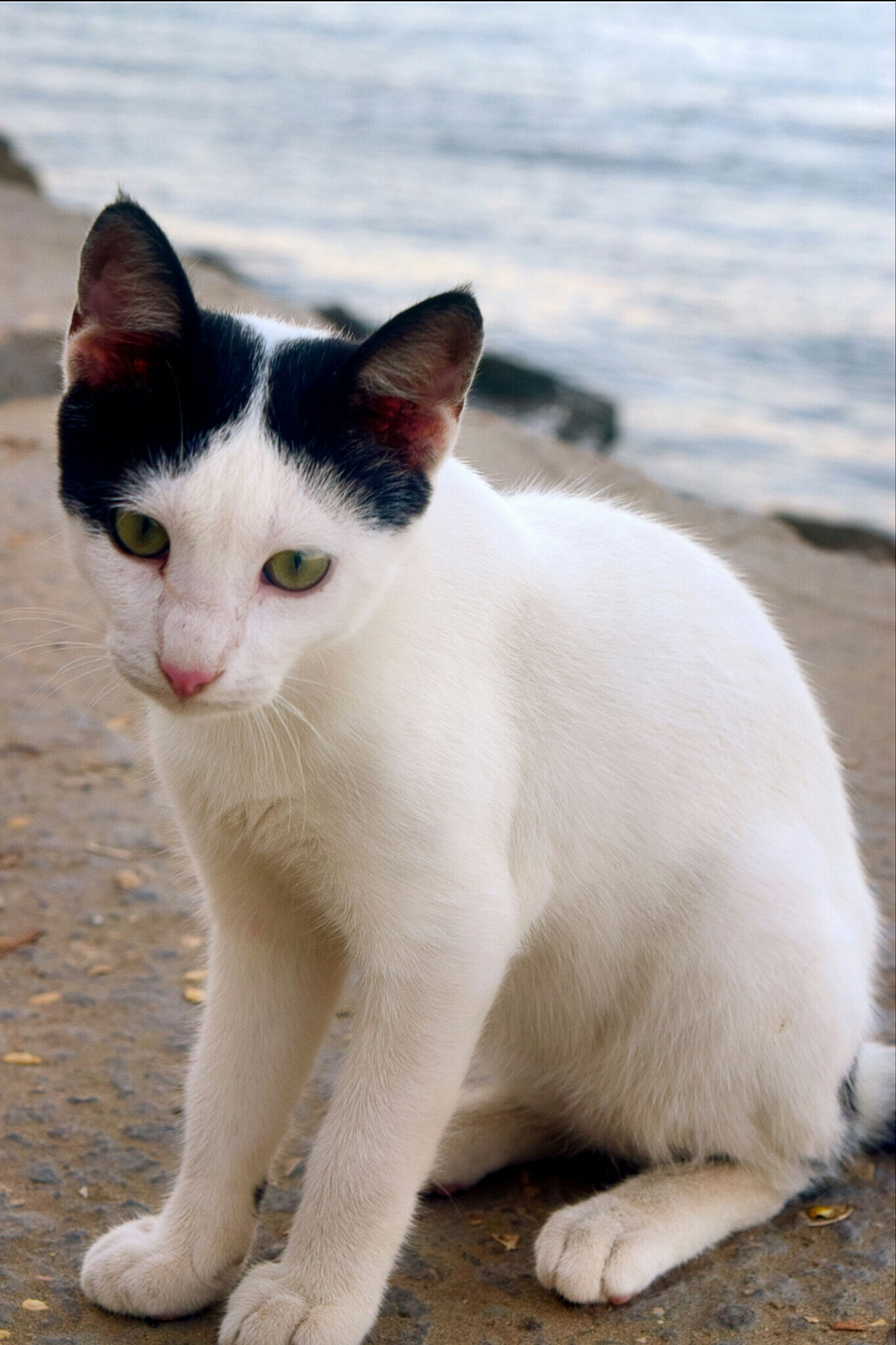 animal themes, one animal, mammal, focus on foreground, domestic animals, pets, close-up, domestic cat, cat, whisker, looking away, water, relaxation, white color, outdoors, feline, nature, two animals, day, sitting
