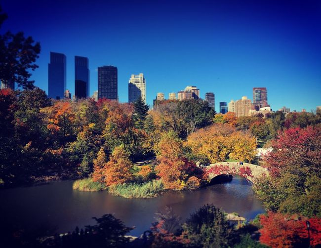 New York, Central Park in Autumn