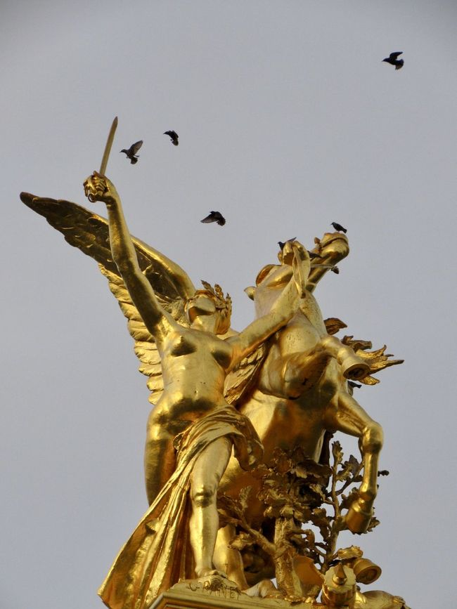 Birds of Paris Architecture Bird Photography Birds Built Structure City City Eye4photography  EyeEm Gallery Gold Gold Colored Low Angle View Paris Pont Alexandre III Sculpture Sky Statue Tadaa Community Taking Photos Travel Travel Destinations Walking Around Walking Around The City