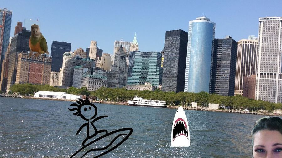 NYC Senegalparrot Perched Bird Building Exterior Skyscraper Shark Looks like a Building LOL! Sufer On A Wave