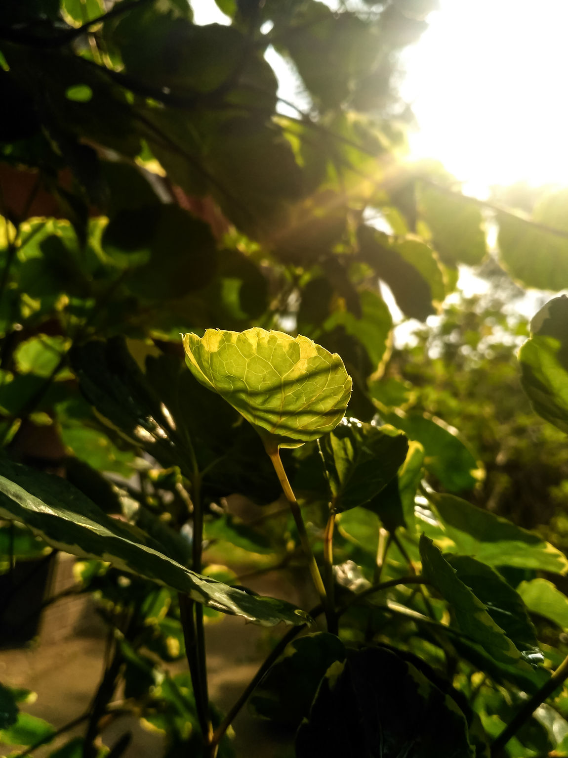 Plant Nature No People Green Color Leaf Growth Outdoors Day Sunlight Green Color Freshness Beauty In Nature Sunrays
