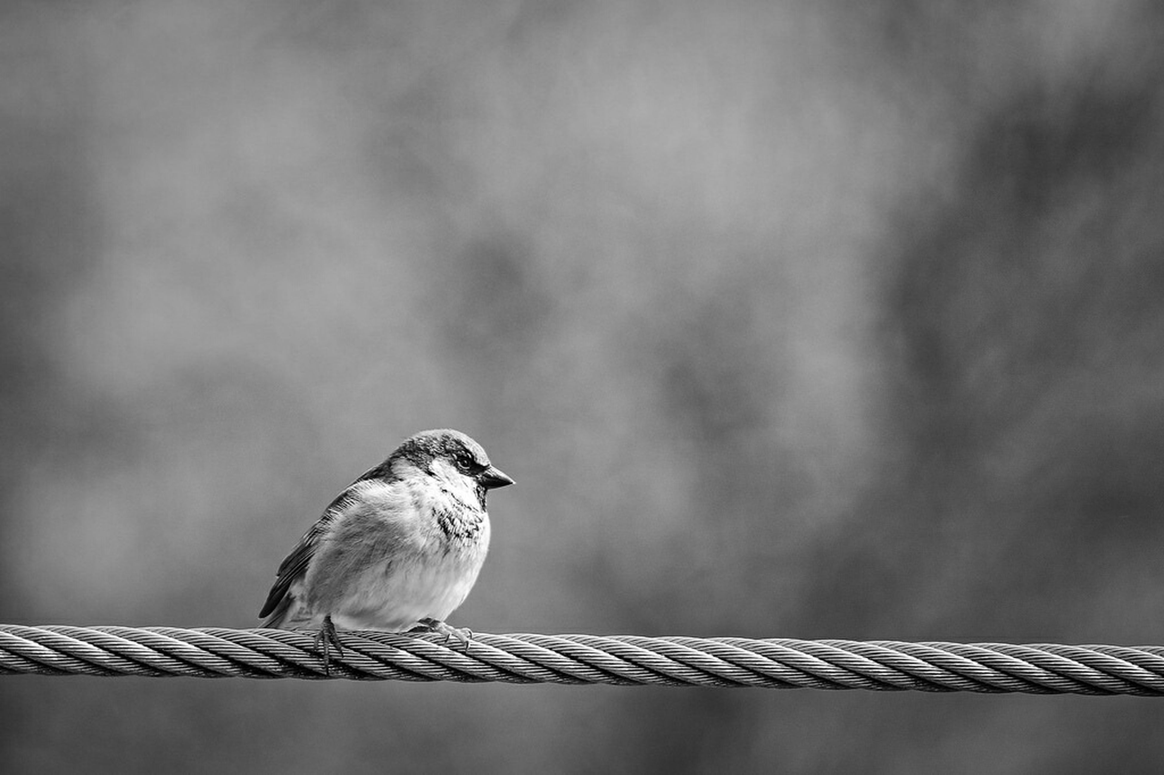 animal themes, bird, animals in the wild, wildlife, perching, one animal, low angle view, focus on foreground, two animals, seagull, pigeon, railing, sky, beak, avian, nature, outdoors, day, close-up, full length
