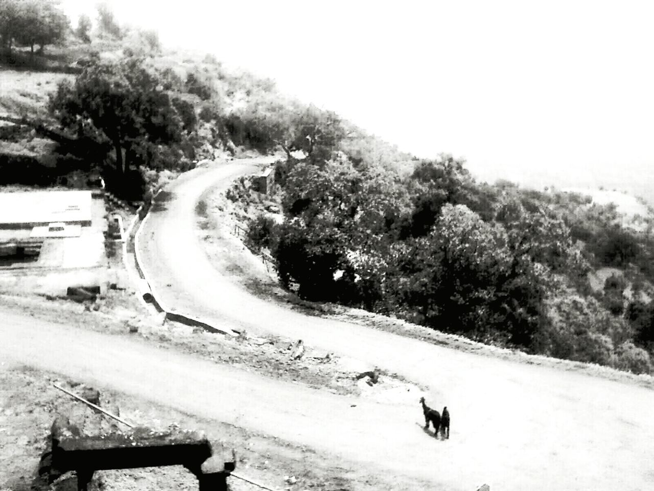 "Travel Photography Road To Nowhere Black And White Photography Live, Love, Laugh Landscape_photography the goats face a tough question, "" which way to take...!?"""