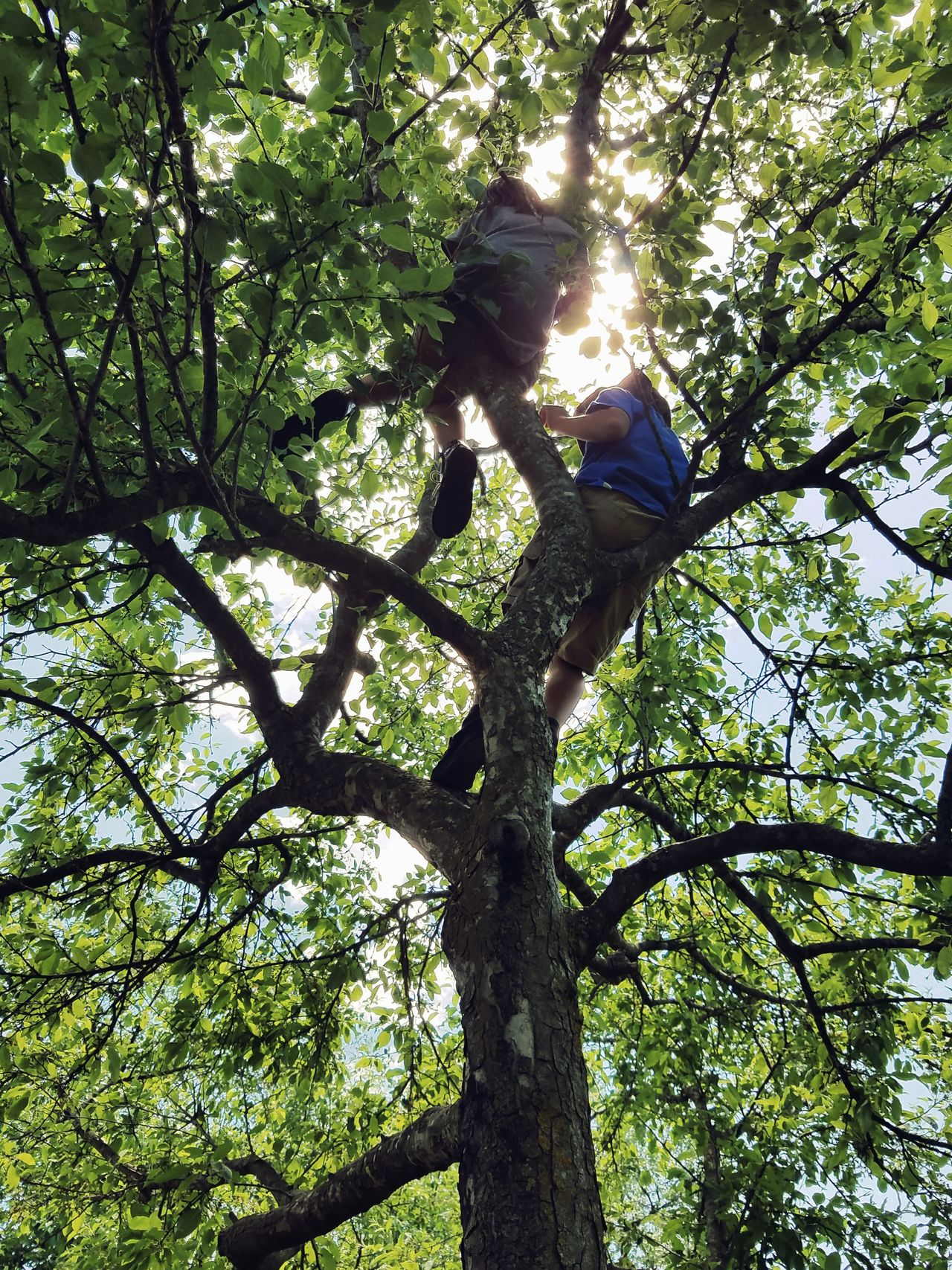 Summer is for tree climbing Tree Growth Outdoors Sunlight Nature Green Color Samsung Galaxy S7 Edge Android Photography Getting Inspired EyeEm EyeEm Best Shots Leaf Green Color