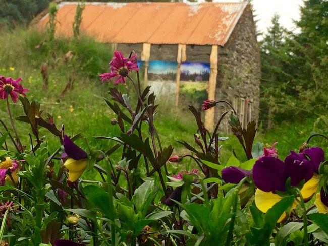 Eyðibýlið Stálpastaðir: Deserted farm named Stálpastaðir No Filter Iceland Skorradalur Stálpastaðir Deserted House