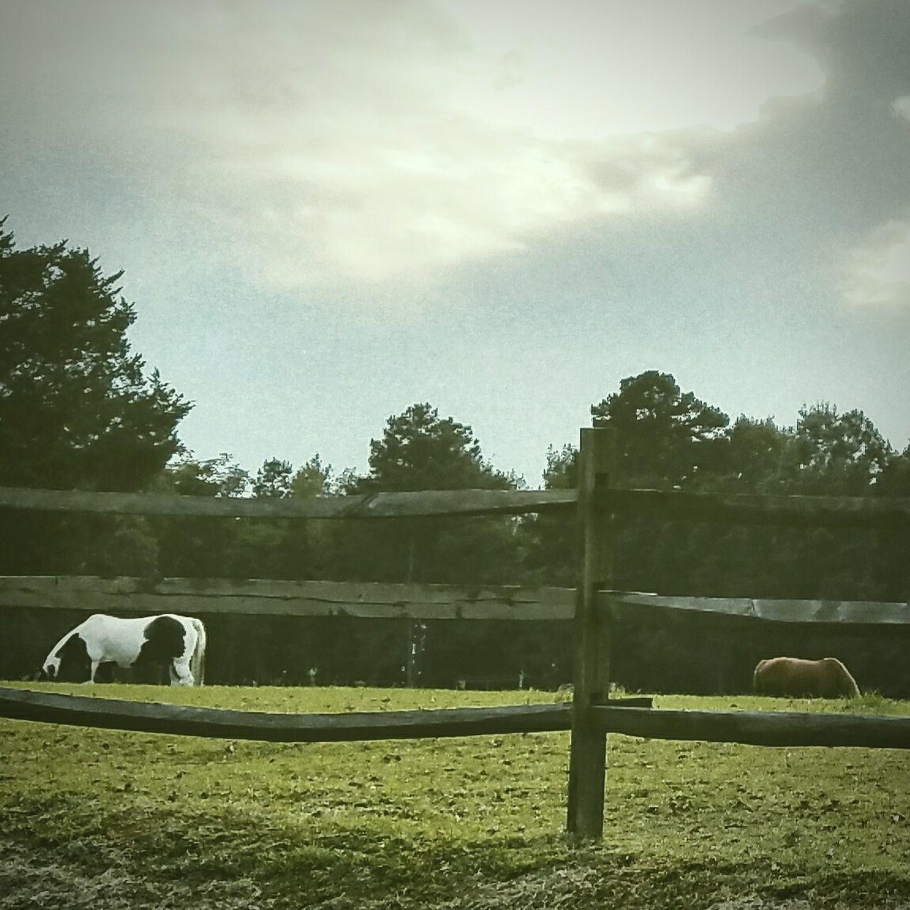 Texaslife Ranchlife Horselovers Texas Sky