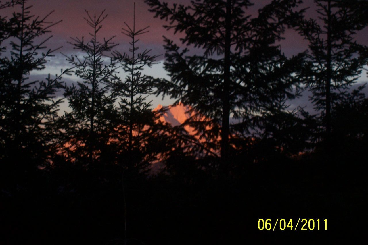 tree, text, communication, night, no people, nature, growth, illuminated, outdoors, close-up, sky