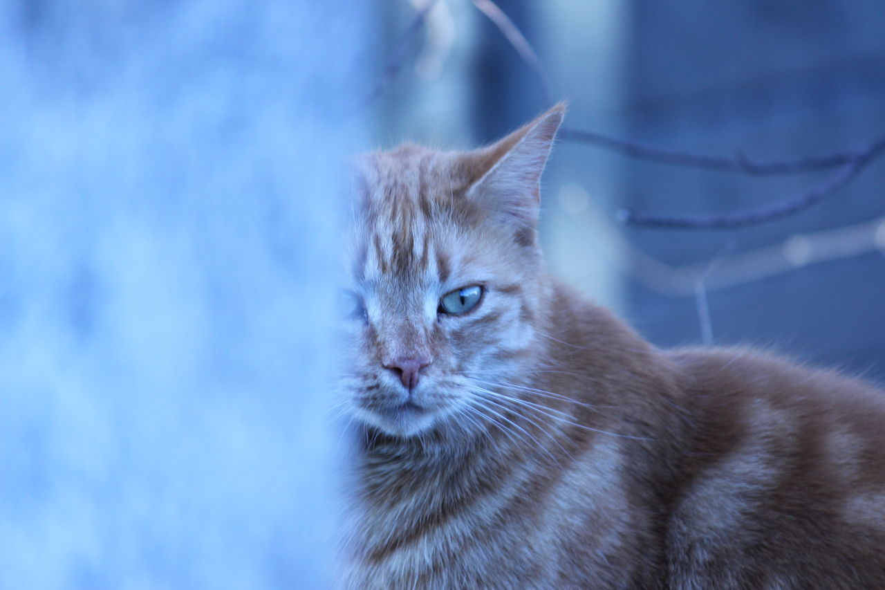 Animal Themes Beauty In Nature Cat Close-up Day Domestic Animals Domestic Cat Feline Home Inmygarden Mammal Nature No People One Animal Orange Color Outdoors Pet Pets Stone Watchinme Whisker Winther Is Coming