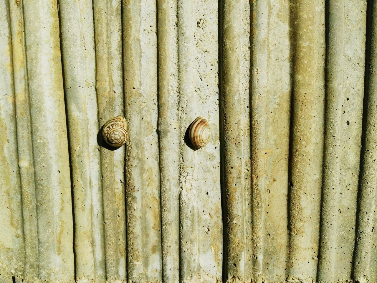 Full Frame Backgrounds Close-up Old Weathered Nut - Fastener Detail Pattern Textured  Bolt Rusty No People Nature Outdoors In A Row Beauty In Nature Tranquil Scene Shelf Snail Shells