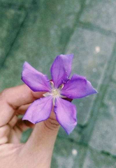 """""""Everyone wants the scent of flowers, but few dirty their hands to cultivate them."""" - Augusto Cury Flowers Love Nature Purple"""