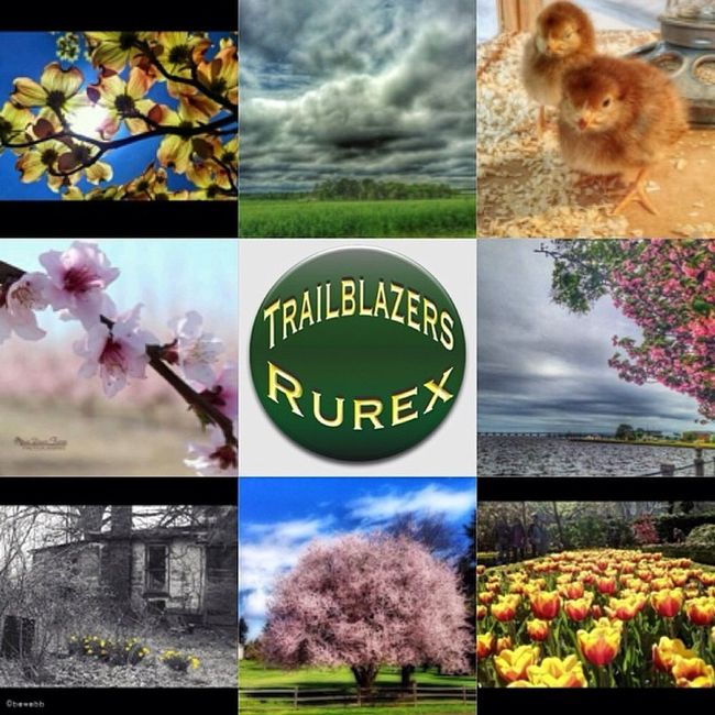 Trailblazers!! The #trb_spring_fling challenge has come to an end!! Thank-you all for your beautiful Spring entries. Presenting honorable mentions: TL doc_smitty1 TC dustyrusty37 TR farmanager ML opendoorfarm MR threecees704 BL bewebb BC jonnyace BR el_q Trb_spring_fling