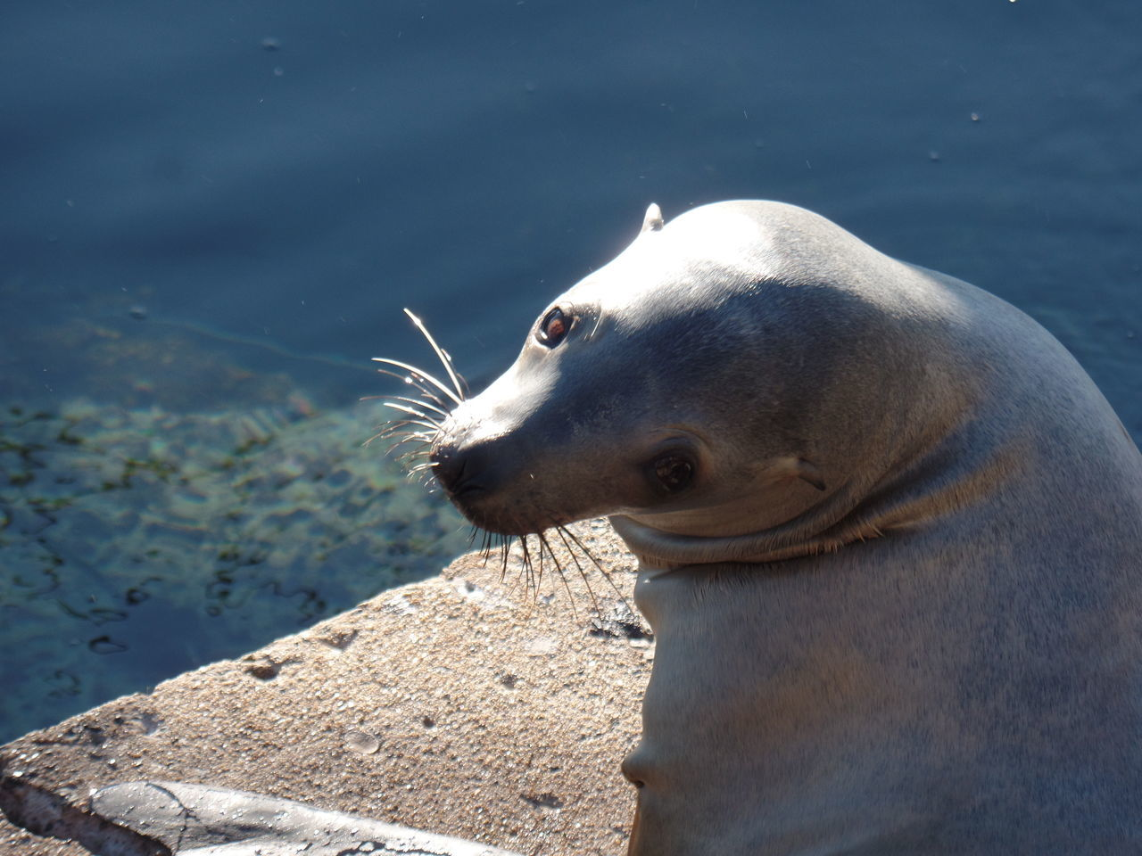 one animal, animal themes, water, lake, day, mammal, close-up, no people, animals in the wild, nature, outdoors, swimming