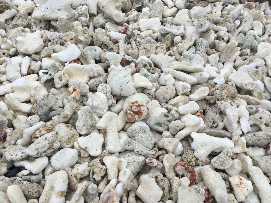She shells sea shells in the sea shore. Beaches Of The World Shells Beaches Sumbreroisland Philippines Anilao, Batangas