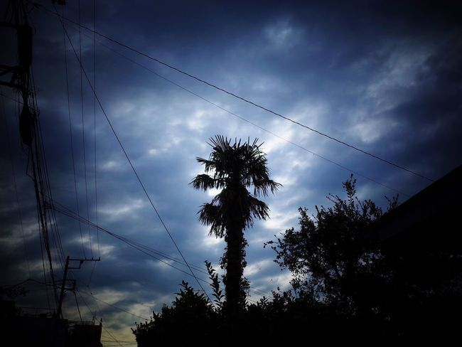 Palm Tree Sky And Clouds Silhouette Silhouette Cable Power Line  Tree Sky Snapshots Of Life