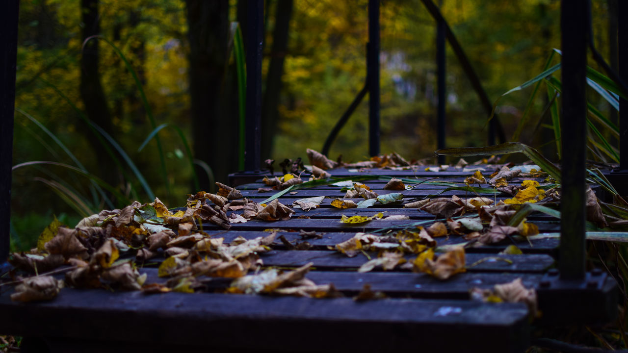 Dry Autumn Leaves On Footbridge At Forest