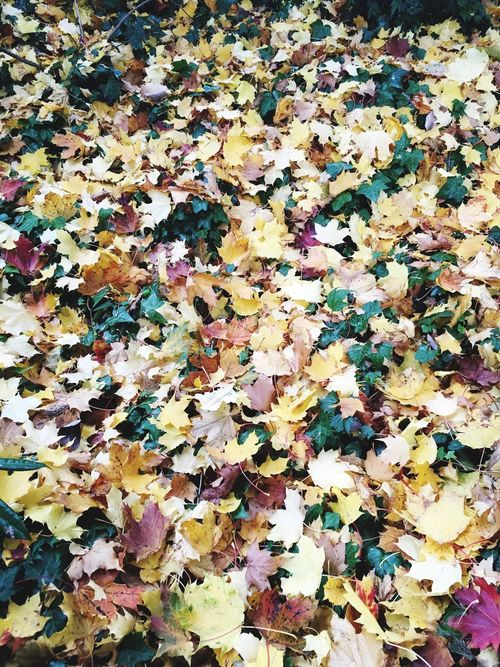 Leaf Carpet Autumn Backgrounds Multi Colored Fallen Nature Leaf Yellow Autumn🍁🍁🍁 Nature Photography