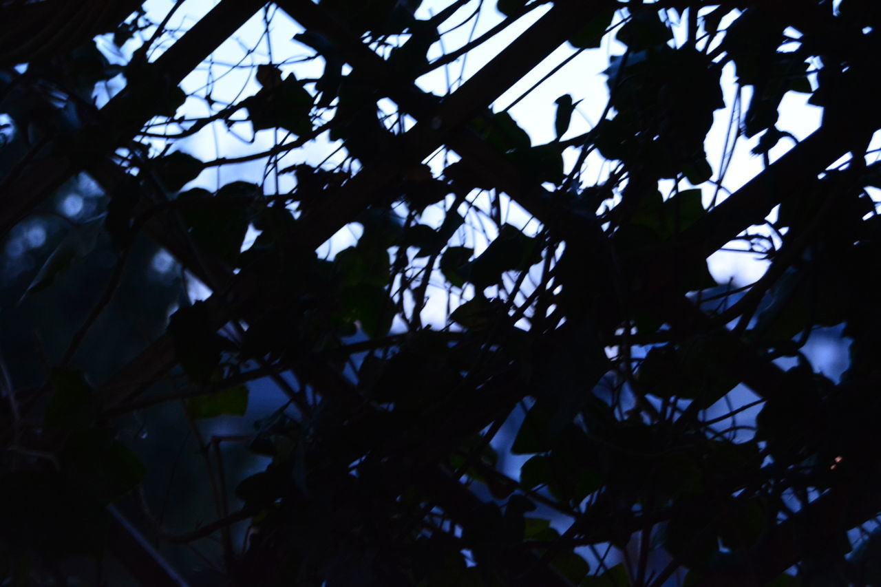 low angle view, indoors, no people, growth, full frame, day, tree, close-up, nature