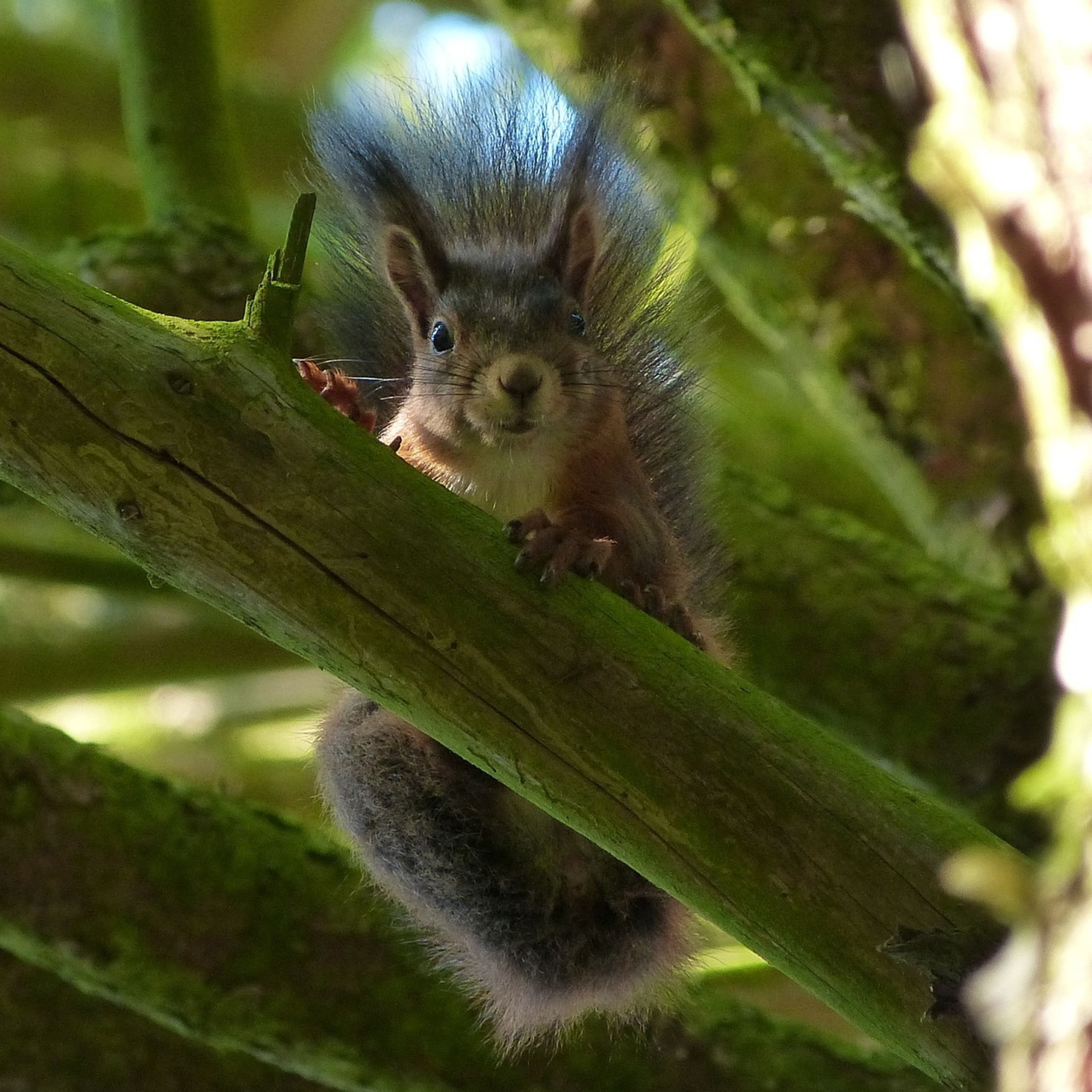 animal themes, one animal, animals in the wild, wildlife, focus on foreground, close-up, tree, branch, nature, zoology, sitting, full length, vertebrate, outdoors, day, looking away, portrait, leaf, no people, squirrel