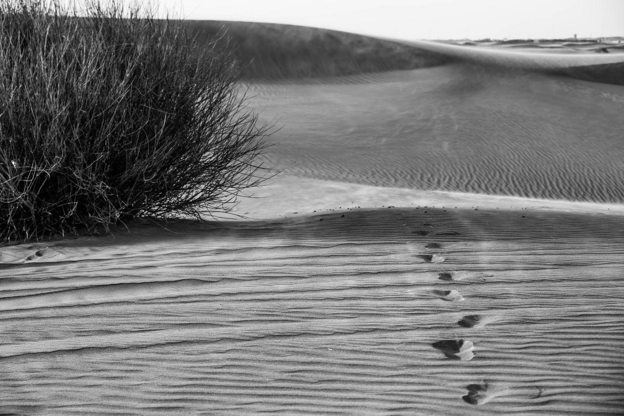 Desert Desert Of Dubai Black And White Blackandwhite Black & White