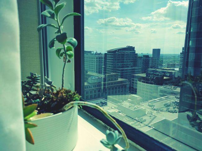 Succulent Plant Pot Window Reflection City Skyscrapers Chicago Cactus Curtain