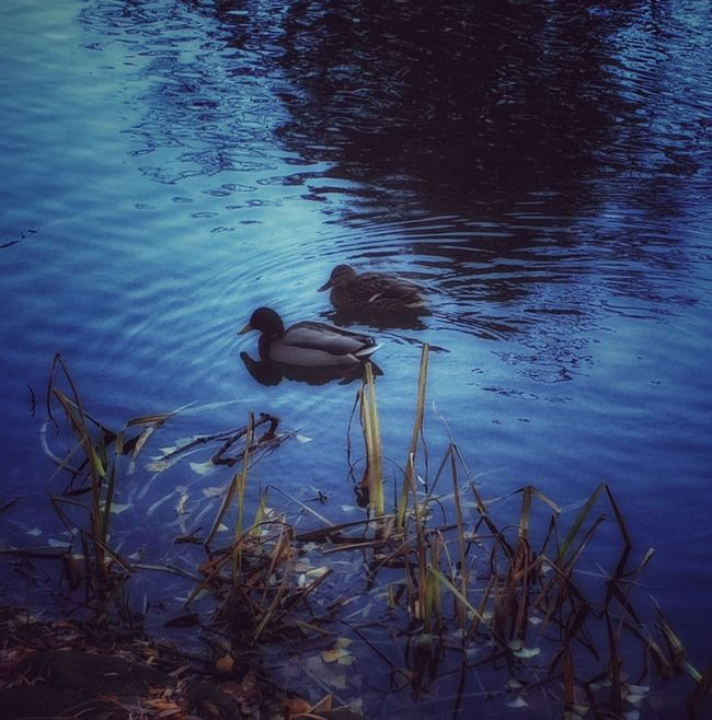 Duck EyeEm Nature Lover Waterfront At The Park