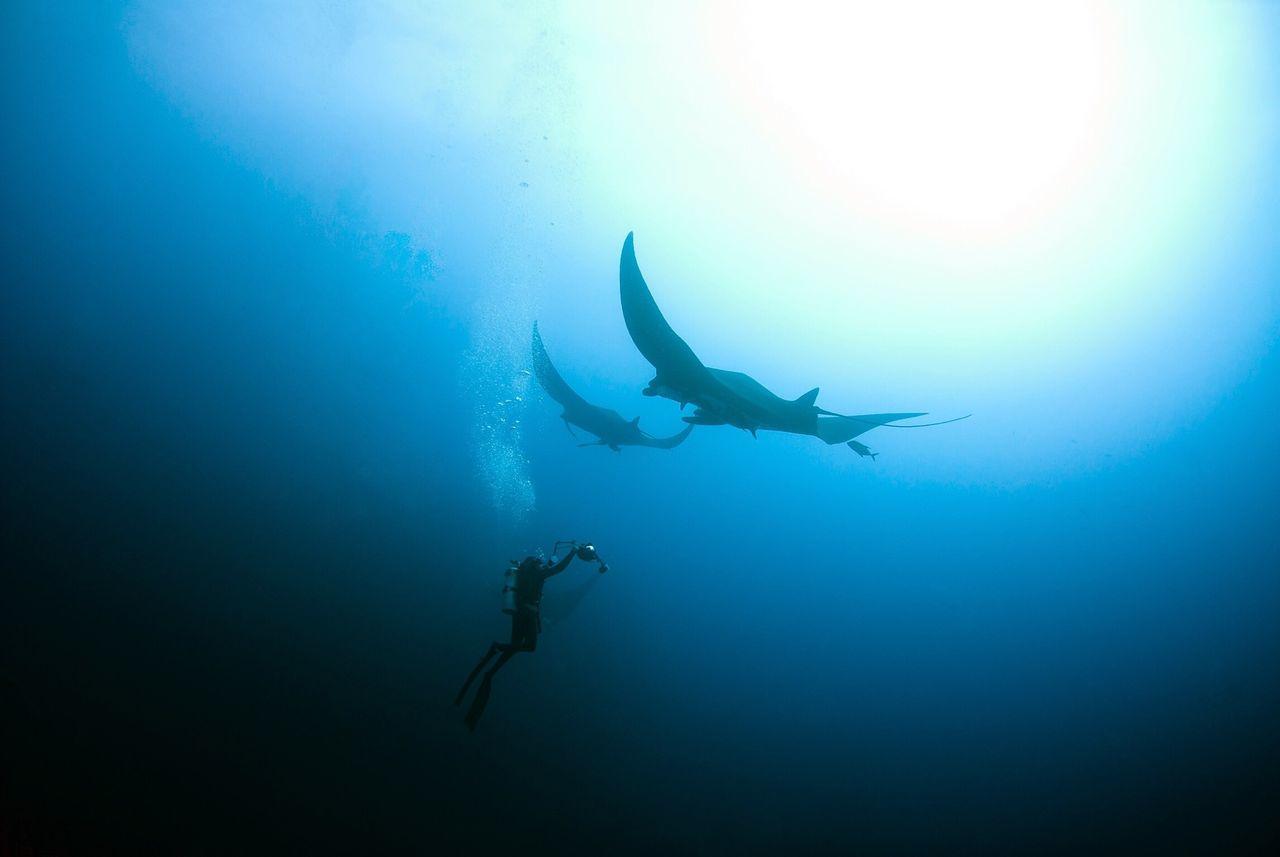Scuba diving diver SCUBA Socorro Manta mantaray manta ray