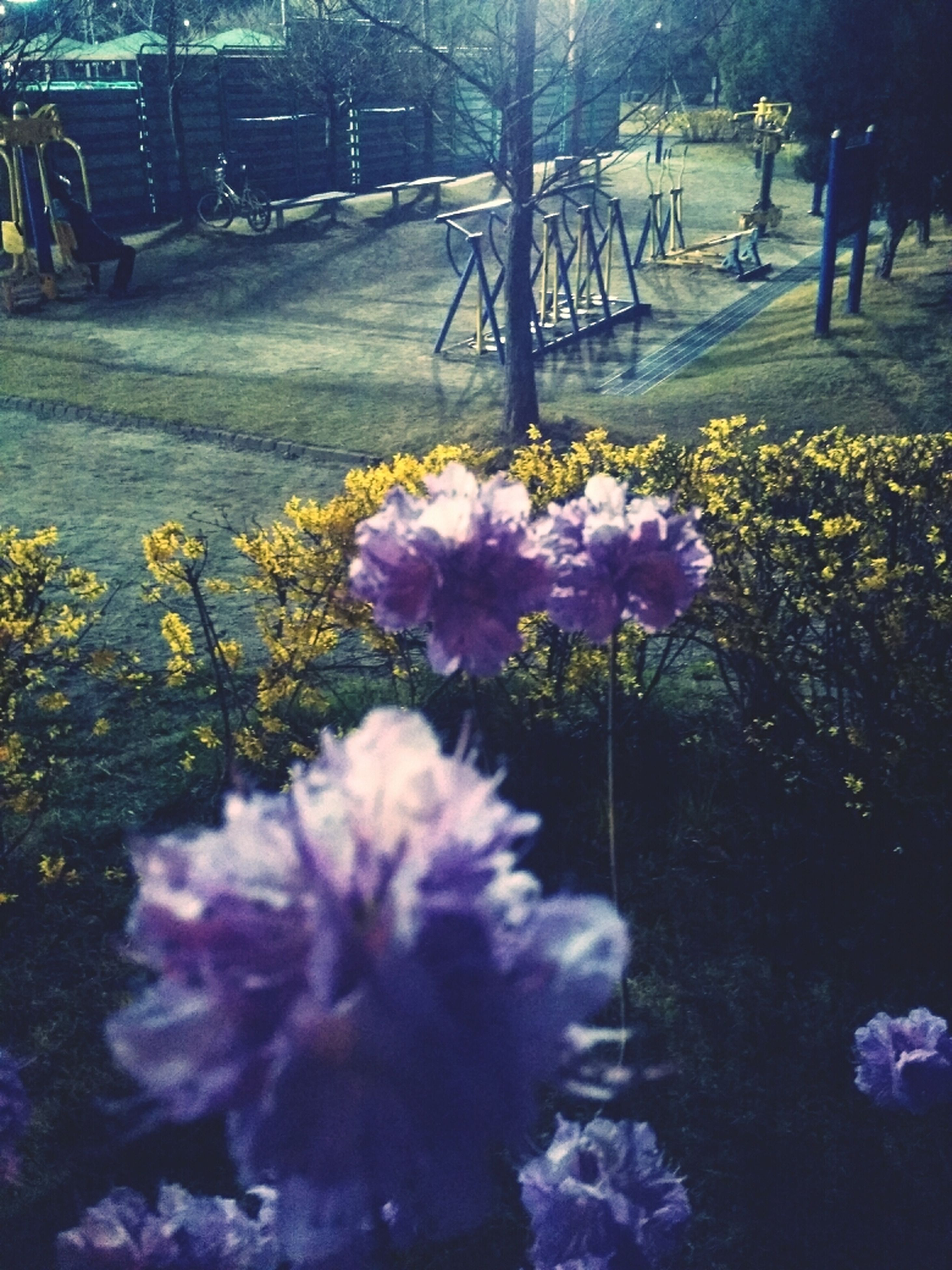 flower, transportation, road, freshness, growth, purple, fragility, nature, street, land vehicle, beauty in nature, blooming, plant, car, mode of transport, outdoors, incidental people, sunlight, high angle view, park - man made space