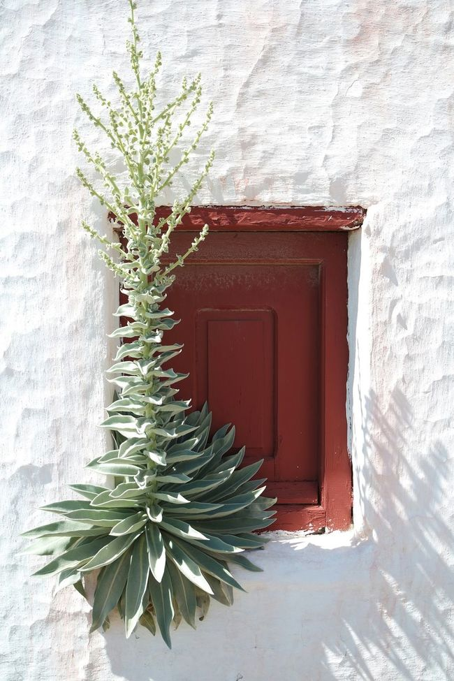 In Mikonos, Greece Taking Photos Eye4photography  Streetphotography The Minimals (less Edit Juxt Photography)