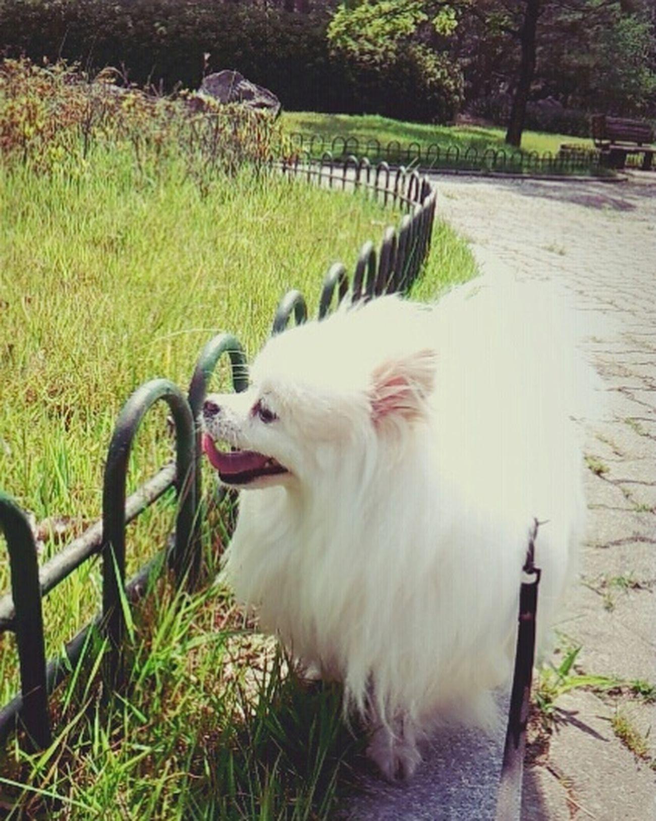 산책! Petti♥ 쁘띠