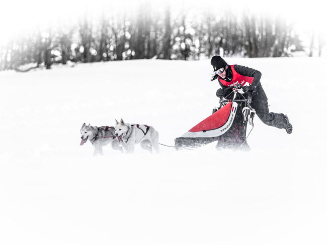 Adventure Cold Cold Temperature Day Frozen Husky Racing Season  Sled Dog Sledge Dog Snow Sport White White Color Winter