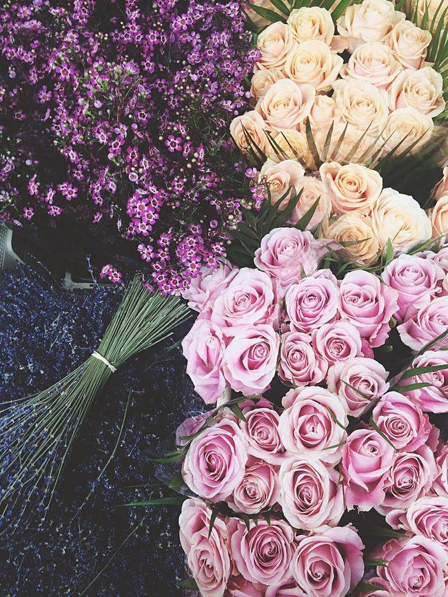 Flowers Roses Pink Flower Pink Flowermarket Columbiaroad Londonlife London Sunday Beautiful Pastel Power Pmg_lon