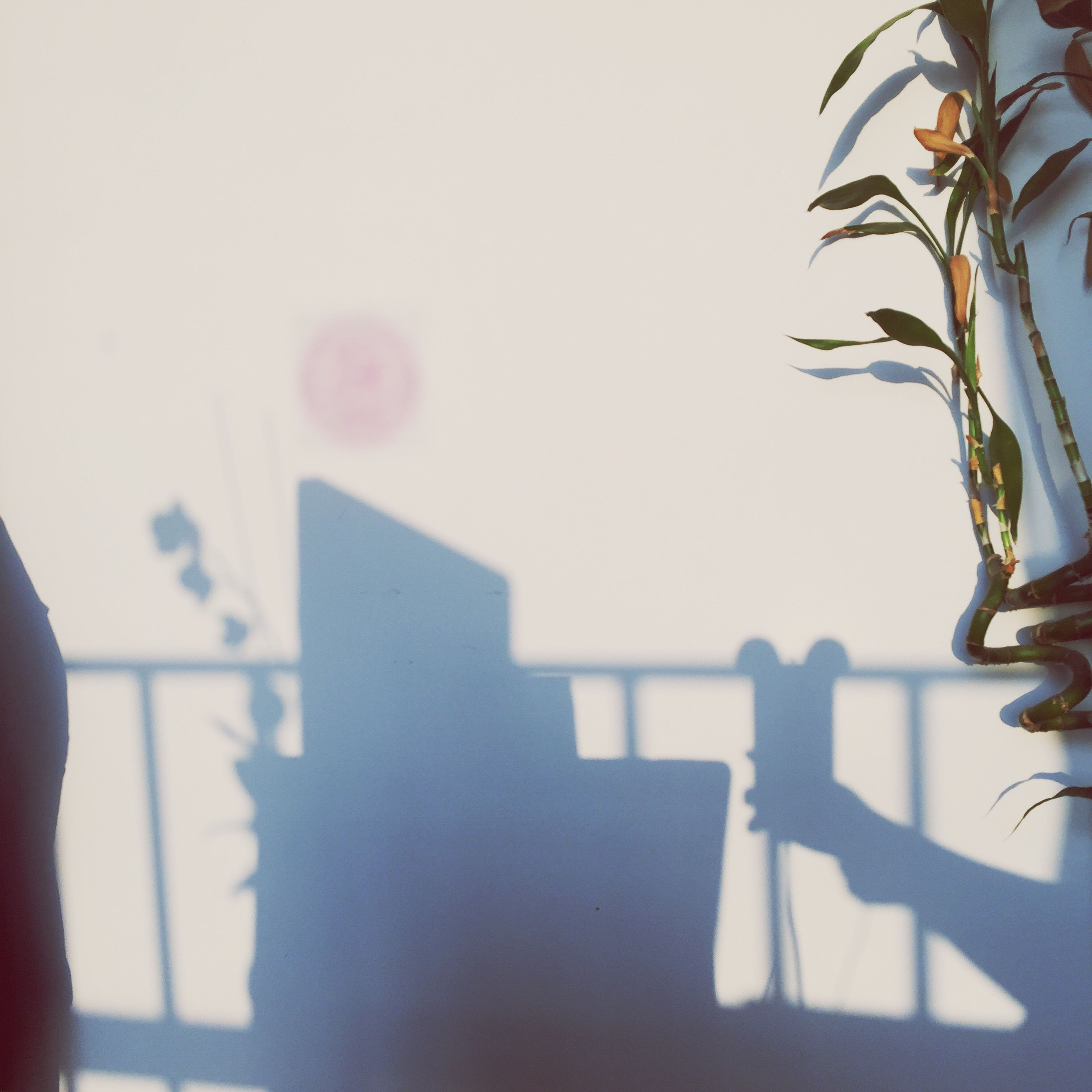 focus on foreground, cropped, part of, built structure, indoors, architecture, person, close-up, potted plant, shadow, selective focus, day, sunlight, wall - building feature, building exterior, one person, growth, flower, clear sky, plant