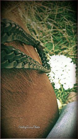 Inspiration EyeEm Best Shots Nature Horses