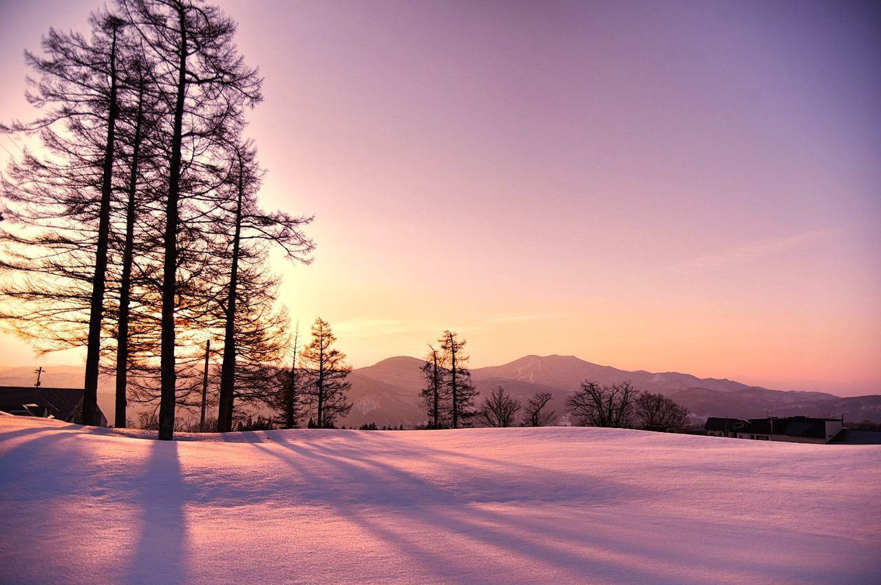 Millennial Pink Beauty In Nature Snow Mountain Tree Winter Landscape Pine Woodland Nature Forest Outdoors Light And Shadow Taking Photos Silhouette Enjoying Life Hello World EyeEm Nature Lover EyeEm Best Shots EyeEm Gallery Darkness And Light Nikon D750 Treescape Snowscape Tree_collection  Sunrise_Collection