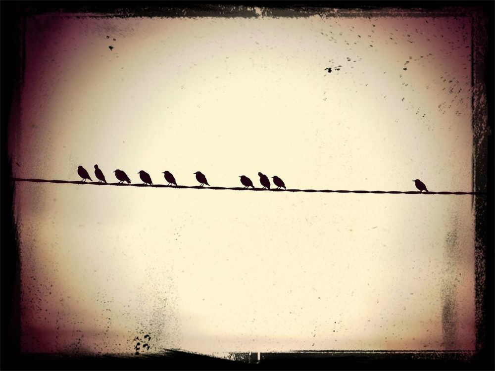 EyeEm Birds Sitting On The Wire Earlygrey Filter