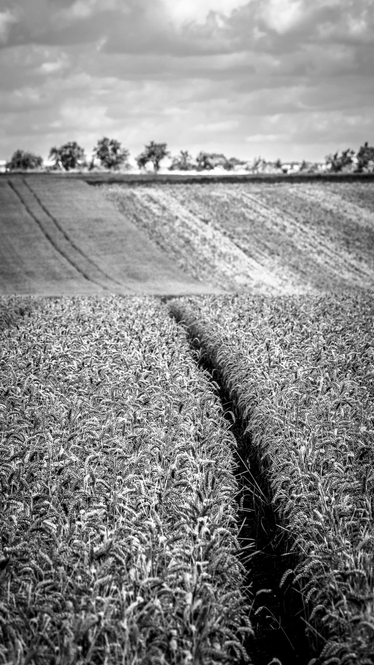 Field Agricultural Land Agriculture Beauty In Nature Black Black And White Blackandwhite Close-up Cloud - Sky Countryside Day EyeEm Best Shots Field Germany Growth Landscape Nature Nature No People Outdoors Scenics Sky Tranquil Scene Tree Wheat Wheat Field