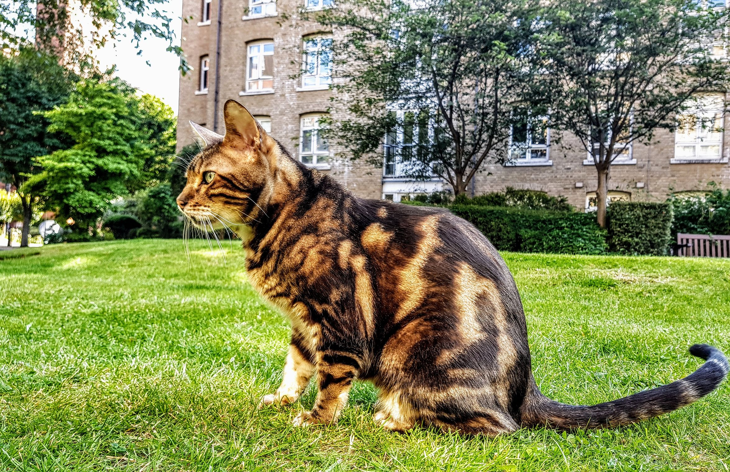 Mr Ed One Animal Pets Bow Quarter