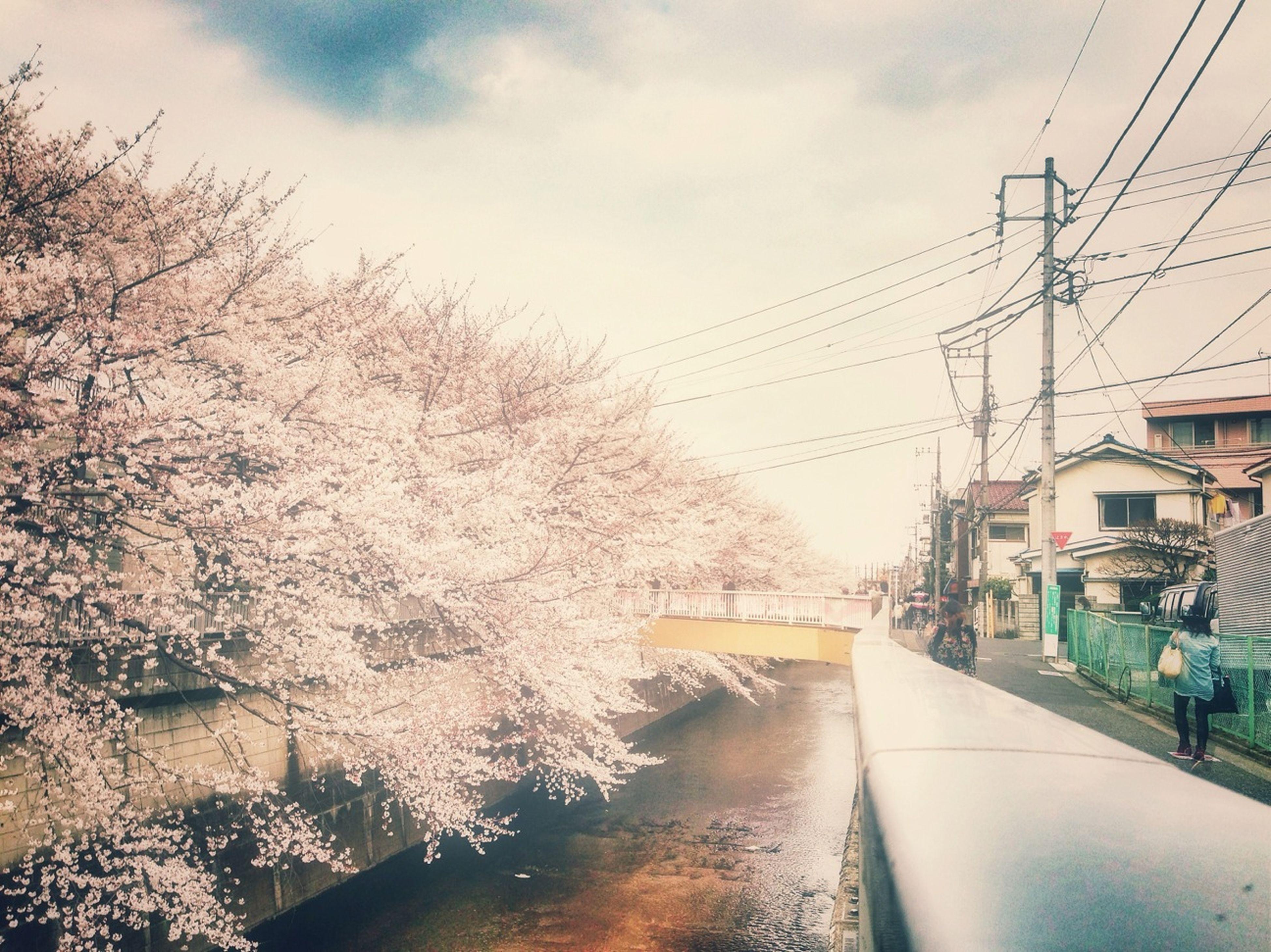 Spring Sakura Cherry Blossoms Great Views