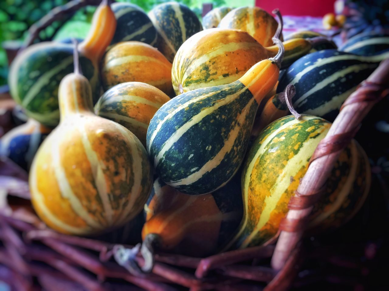 Pumpkins Halloween Yellow Green Food Selective Focus Healthy Eating Vegetable Organic Pumpkin Choice Large Group Of Objects Freshness Market Retail Display Green Color Agriculture