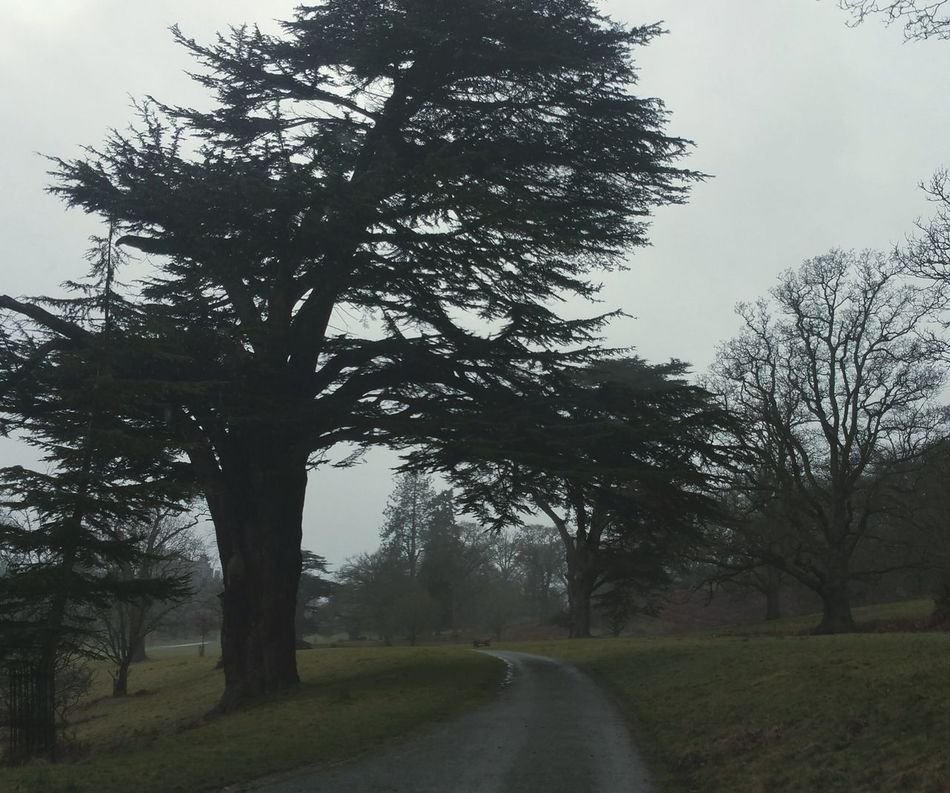 ...When walking in the Rain and wind, imagine feeling the raw power of the atmosphere, connecting to Nature through this feeling ... I am starting to like any weather... Park Trees Inviting Road Welshpool Wales Road Cedars Old Tree Evergreen