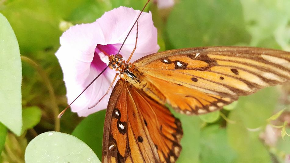 Wildlife Animal Themes Insect One Animal Animals In The Wild Butterfly - Insect Close-up Flower Butterfly Pollination Pink Color Beauty In Nature Focus On Foreground Plant Nature Growth Animal Wing Single Flower Symbiotic Relationship Fragility