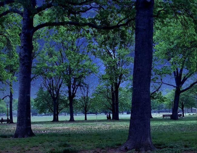 Park Trees Night Fall