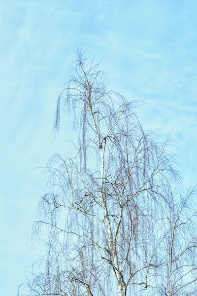 Sky Nature No People Day Fragility Outdoors Blue Close-up Beauty In Nature Freshness