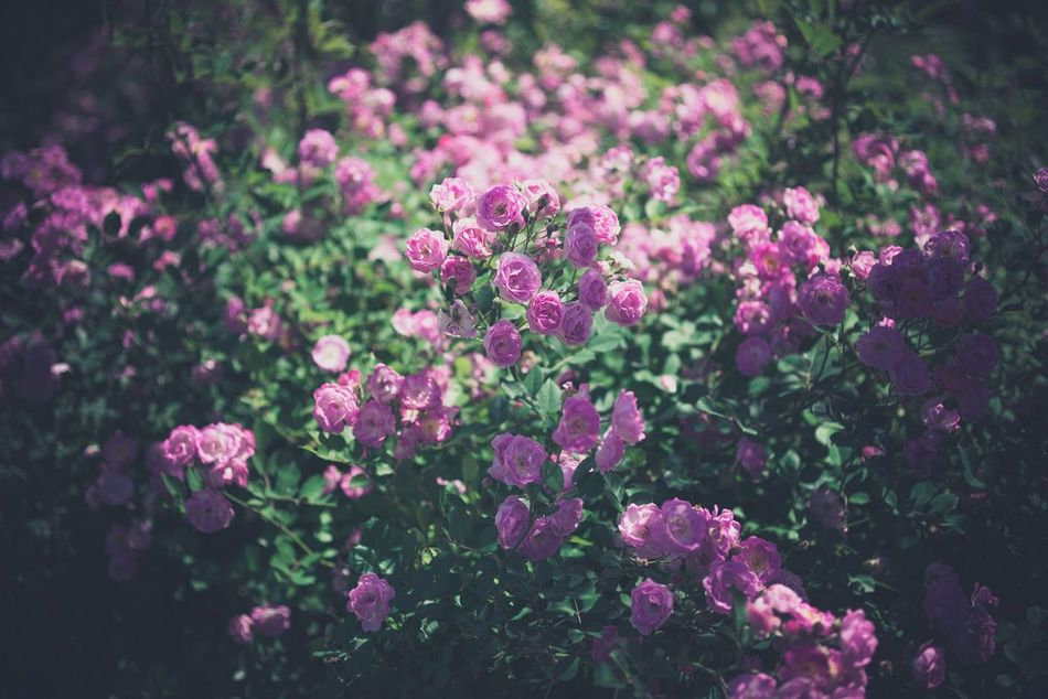 Beautiful stock photos of blumen, Beauty In Nature, Blooming, Day, Flower