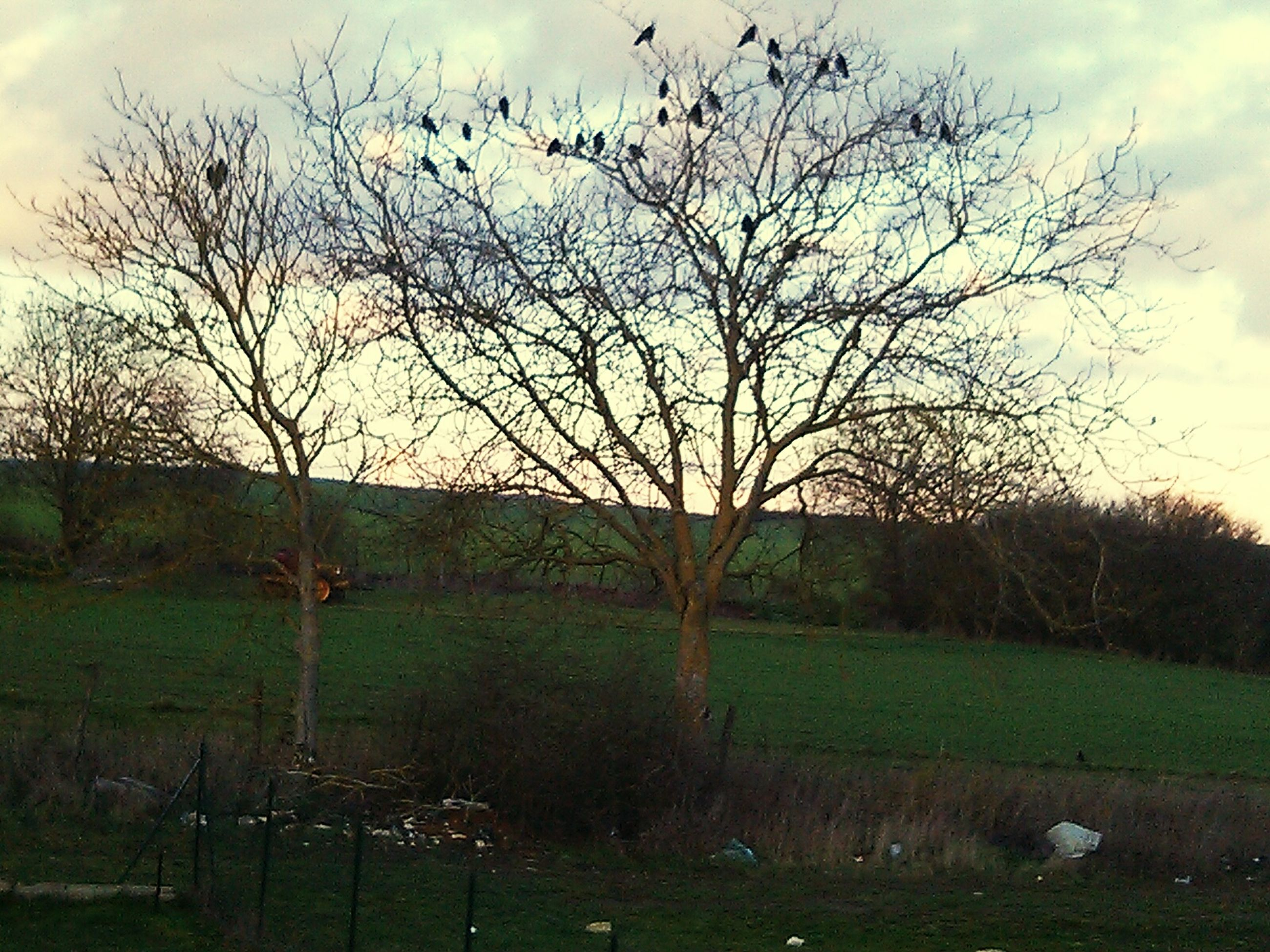 bare tree, tree, field, grass, sky, landscape, tranquility, fence, tranquil scene, branch, nature, grassy, scenics, beauty in nature, rural scene, cloud - sky, non-urban scene, growth, tree trunk, no people
