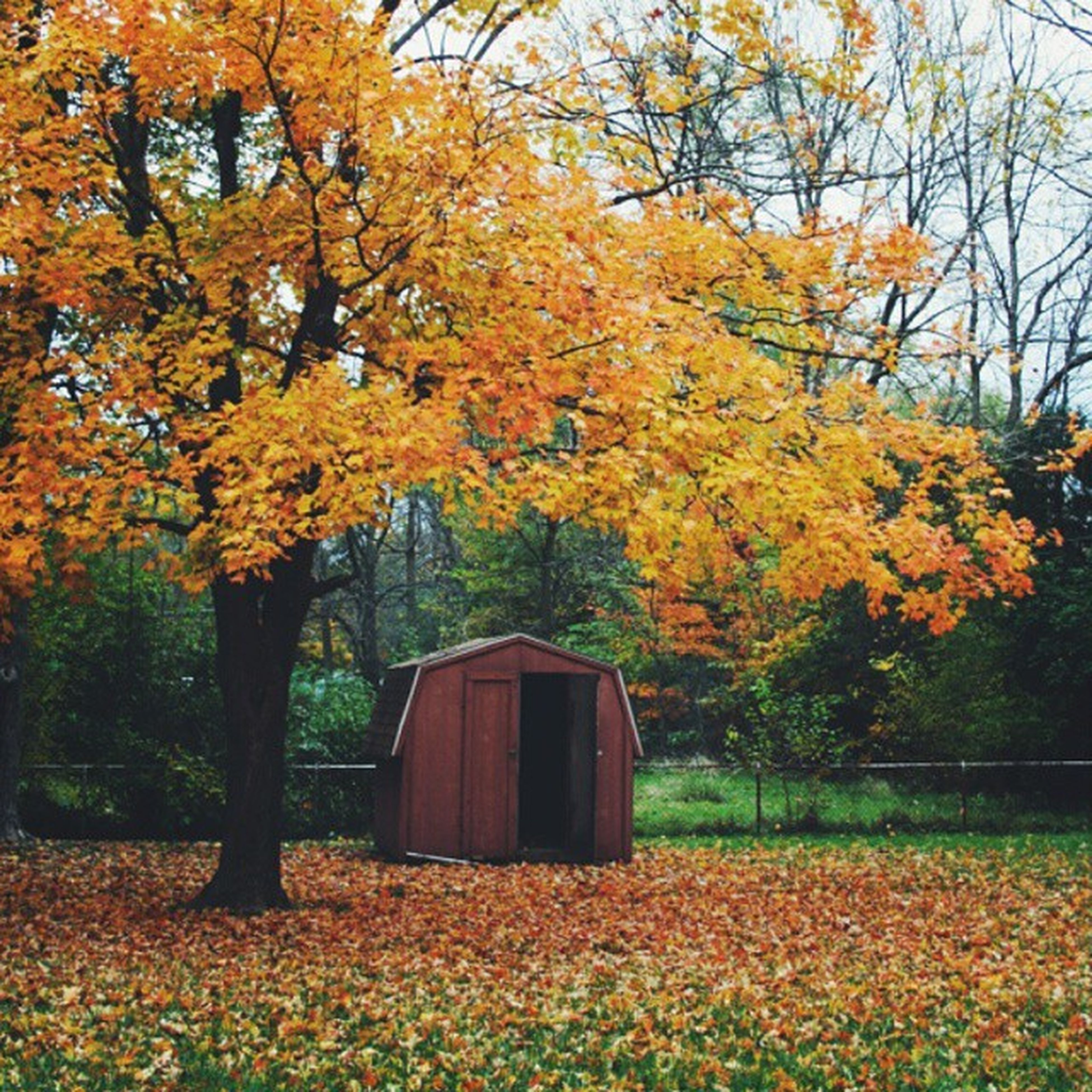 tree, autumn, change, season, yellow, growth, orange color, beauty in nature, branch, nature, tranquility, flower, built structure, tranquil scene, architecture, building exterior, leaf, scenics, field, house